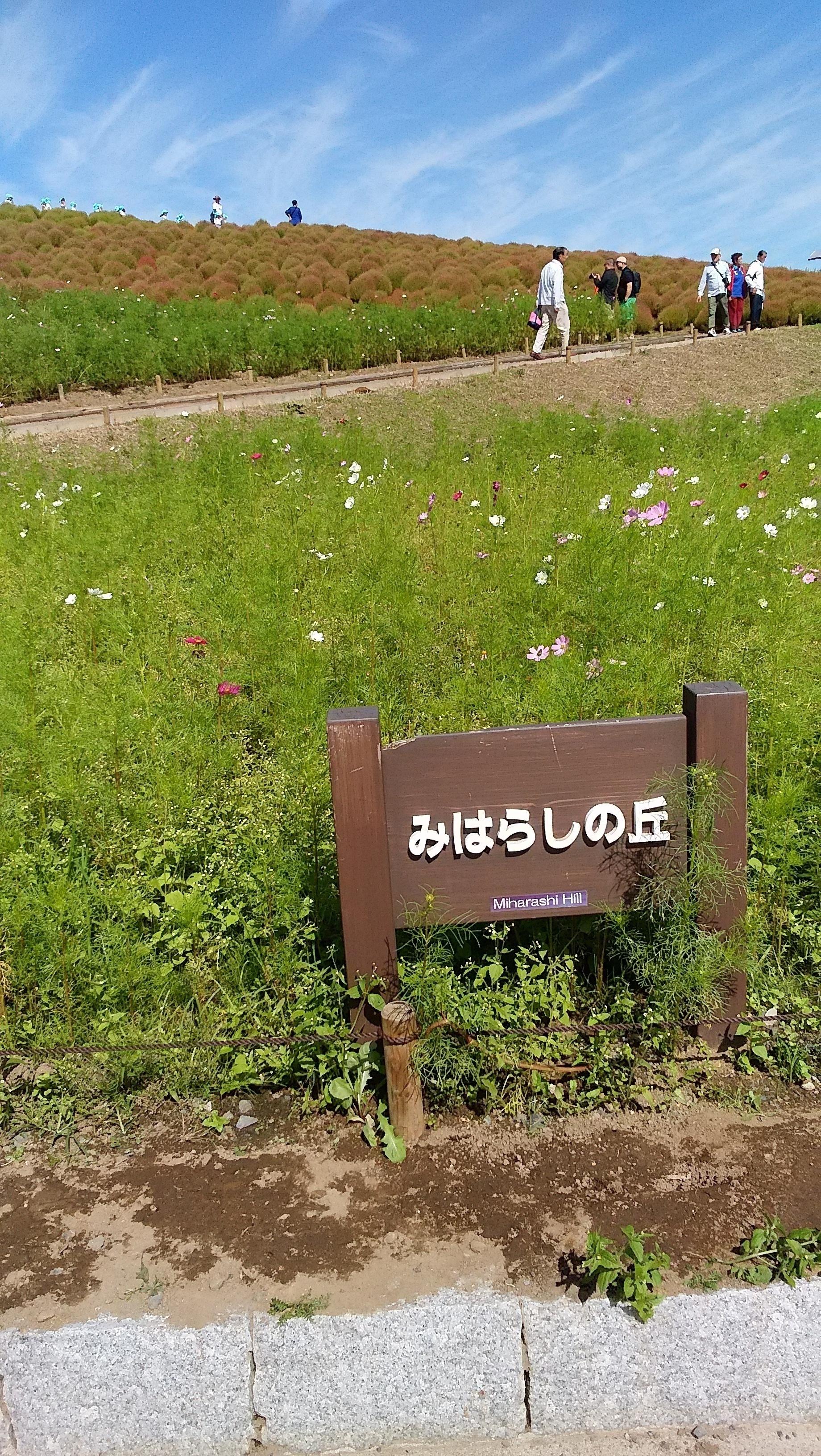 IMG_20161007_112501.jpg
